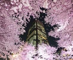 Midtown Blossom