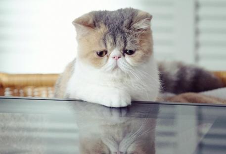 オトナ女子 ペットの猫 ちくわ